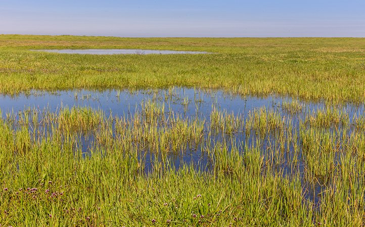 Merced Vernal Pools and Grassland Reserve